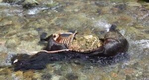 Imatge de l'euga morta