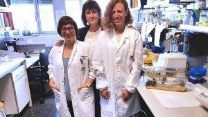 Les tres investigadores catalanes que han demostrat l'eficàcia de la teràpia genètica en la lluita contra la diabetes i l'obesitat