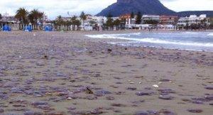 Meduses a la platja de Xàbia