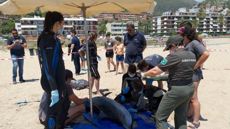 El dofí llistat mort a Sitges