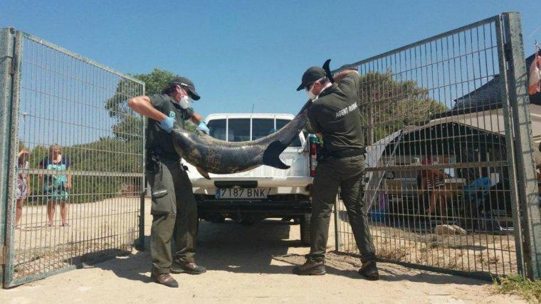 Imatge del dofí mort a Tarragona