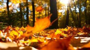 El otoño llegará este mes de septiembre