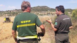 La campanya de la sega és un operatiu dels Agents Rurals fet per a la prevenció d'incendis relacionats amb la sega del cereal.