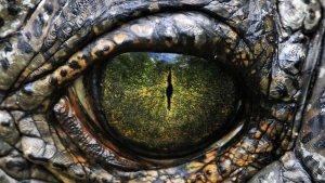 Los tipos de dinosaurios que habitaban la Tierra antes de su extinción.