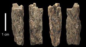 Restes d'os de la filla d'un home denissovà i una dona neandertal