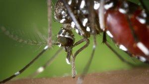 Te enseñamos cómo evitar la molesta picadura del mosquito tigre.