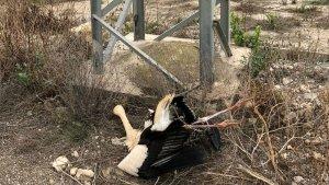 Una de les cigonyes mortes a Amposta