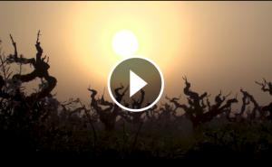 Vídeo promocional DO Penedès