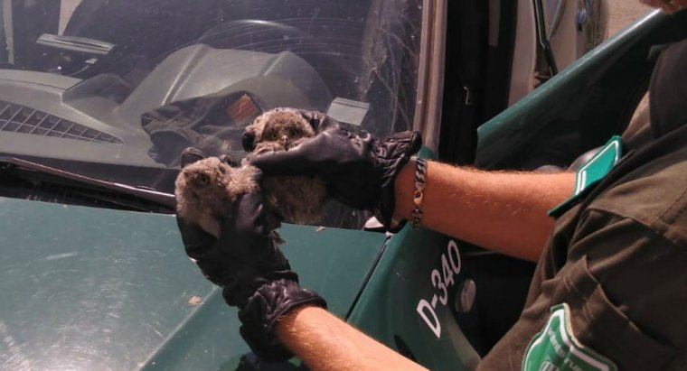 Imatge de les aus rescatades