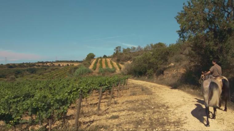 Les vinyes biodinàmiques de Gramona
