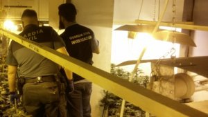 Desmantellen una plantació de marihuana a Carcaixent, amb un detingut