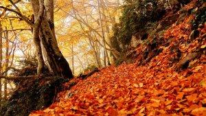 El otoño canviará el color de los bosques a partir de la semana que viene