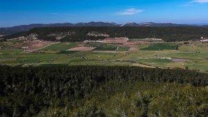 Plana d'Ancosa a La Llacuna