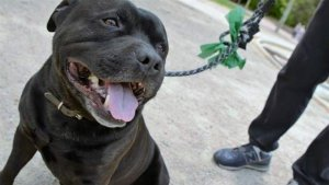 Se desconoce si fueron uno o dos perros los que la atacaron