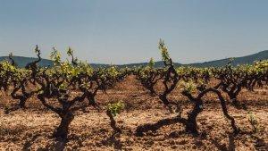 Vinyes de Tarragona
