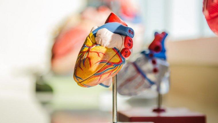 tipos de enfermedad cardiovascular