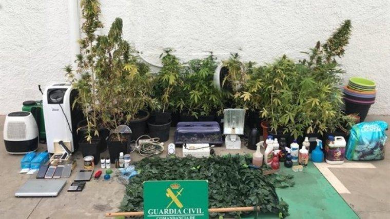 Imagen del material y las plantas de marihuana recuperadas por la Guardia Civil.