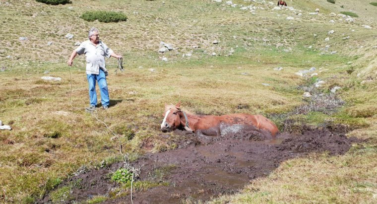 L'euga atrapada en el fang