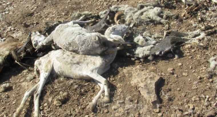 Pla mig on es poden veure diversos animals morts a l'explotació del ramader detingut a Ontinyena