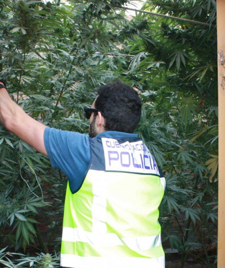 Un agent de la policia de l'Estat observant la plantació de marihuana