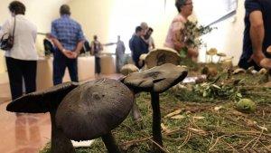 Arriba una nova edició de l'Exposició de Bolets Vila del Morell