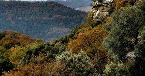 El bosc de Savassona és un paratge ple d'històries de bruixeria, sacrificis i fenòmens paranormals