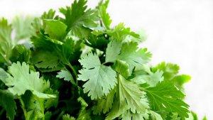El nombre científico del cilantro es Coriandrum sativum.