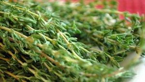 El tomillo siempre se ha utilizado como planta medicinal debido a sus múltiples propiedades y beneficios.