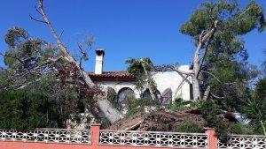 Els pins van caure a sobre de les cases de la urbanització Pallaresos Park.
