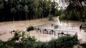 Imagen del río Genil este domingo