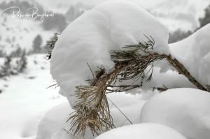 Imatge de la neu al Pallars