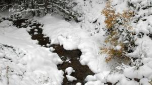 La neu va caure amb força al Pallars