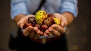 Las castañas son unos pequeños frutos secos que pueden incluir en una gran cantidad de recetas y postres.