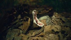 Las serpientes más venenosas y letales que debes evitar.