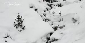 Més neu al Pallars Sobirà