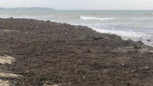 Tota la vora de la platja de Cambrils està plena de deixalles