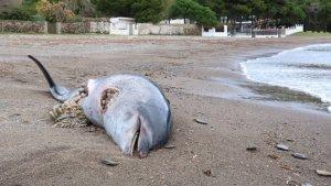El dofí va ser trobat a la Cala Montjoi de Roses