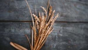 El gluten representa el 80% de las proteínas del trigo.