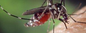 Este verano aumentarán las plagas de mosquitos