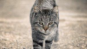 La Bisbal comença a esterilitzar gats de carrer.