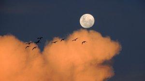 La Luna tiene dos vecinos pseudo-satélites