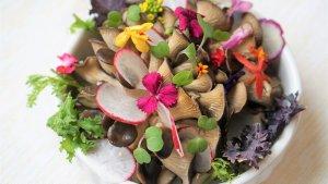 Las flores comestibles aportan un toque diferentes y especial a nuestras recetas.