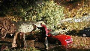 Los Bomberos de Santiago retiran un gran árbol que se ha roto encima varios coches