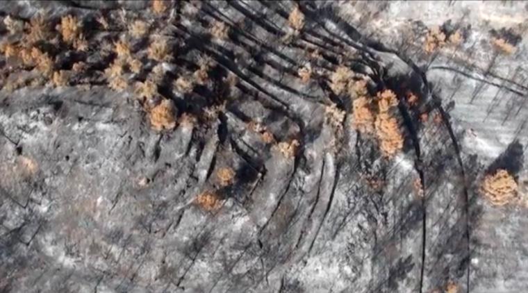 Terreny arrasat per un incendi forestal
