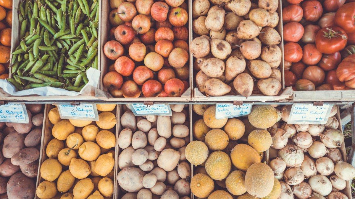 5 grupos principales de alimentos