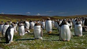 Centenares de pingüinos habitan la isla Borbón