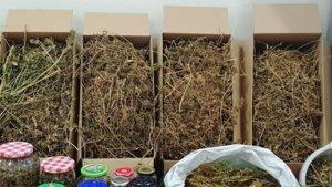 Detingut per cultivar marihuana en un remolc frigorífic dins d'una nau en Pobla Tornesa