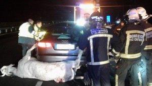 El golpe con el animal ha provocado la muerte a uno de los ocupantes del turismo