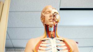 En un neumotórax se produce una acumulación anormal de aire en el espacio pleural.
