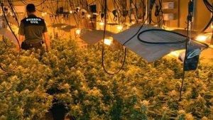 Han incautado 400 plantas de marihuana, además de 17 dosis de heroína, 152 dosis de cocaína
